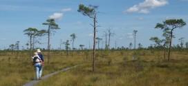 wandelen in Estland