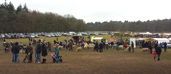 De schapen en lammetjes lopen tussen de bezoekers
