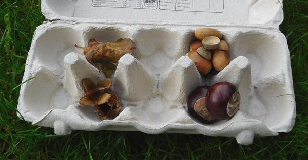 schatkist herfst eierdoos
