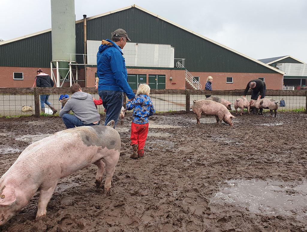 spelen in de modder varkens
