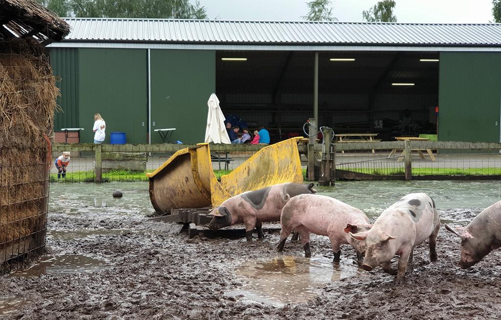 varkensglijbaan modder